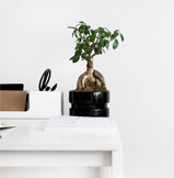Slide bureau bonsaï